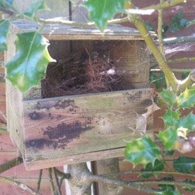 Bird Box With Nest Open Front Bird Ecology Mitigation