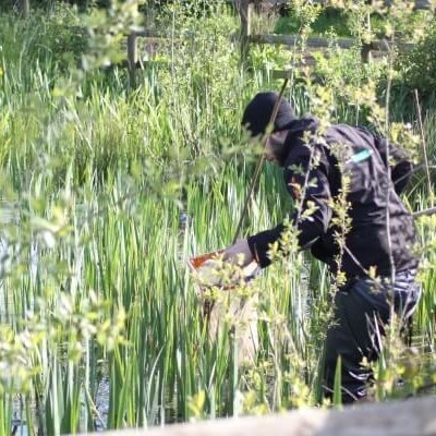 Checking Newt Traps Gcn Newt Survey