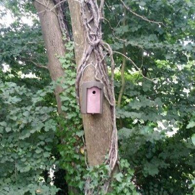 Circle Front Bird Box Ecology Survey Mitigation