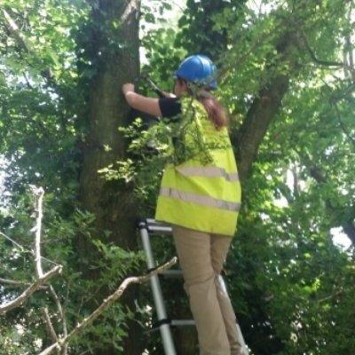 Installing Bat Box On Tree Bat Mitigation