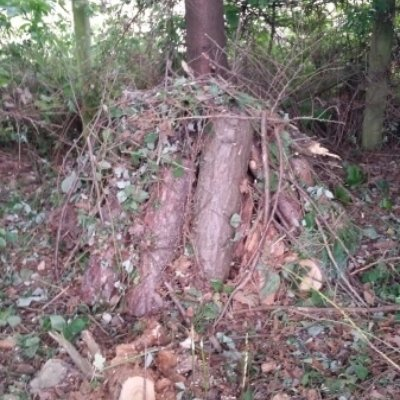Log Pile Site Enhancement And Mitigation For Invertebrates And Reptiels