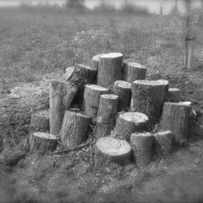 Log Pile Black And White Habitat Creation Mitigation Strategy