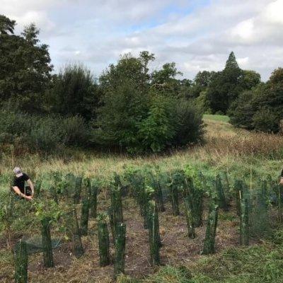 Planting Hedge Site Enhancement Ecology Biodiversity Netgain