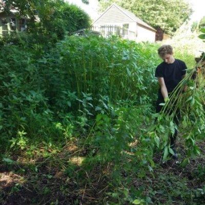 Removing Invasive Plant Species Hampshire Uk Ecology
