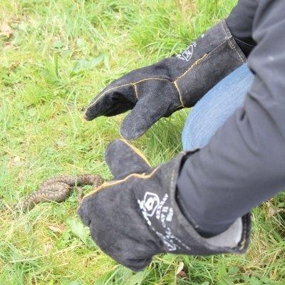 Capturing Adder Reptile Mitigation