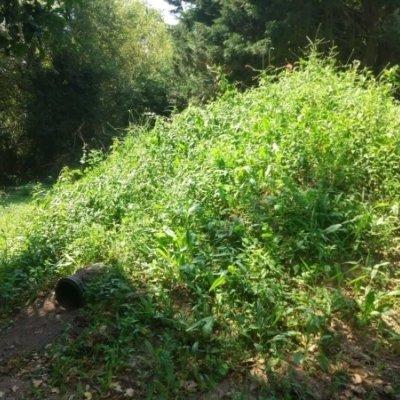 Final Artificial Badger Sett Vegetation Growth Badger Mitigation