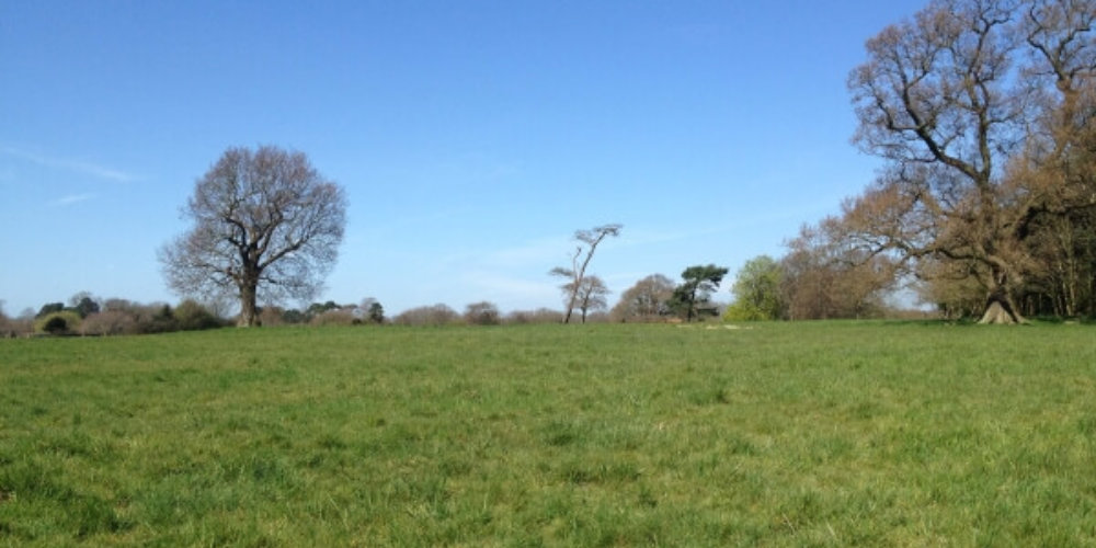 Grass Field Mature Trees Ecology Survey Phase 1