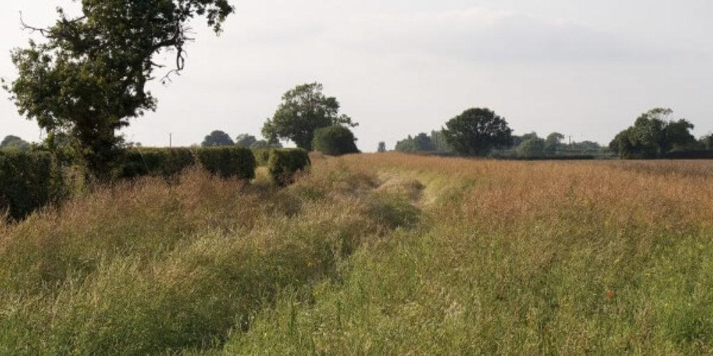 Grass Field Phase I Ecology Survey