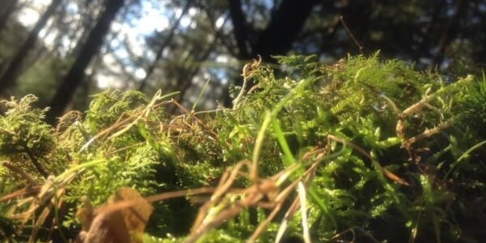 Moss In Forest Uk Ecology Survey