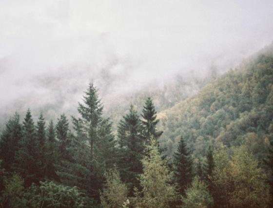 Bilde av norsk skog i tåke