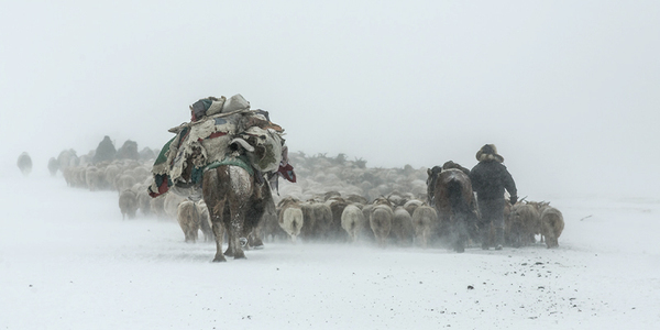 NEW: Herders on the move