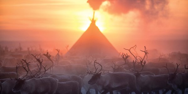 NEW: Reindeer at sunrise