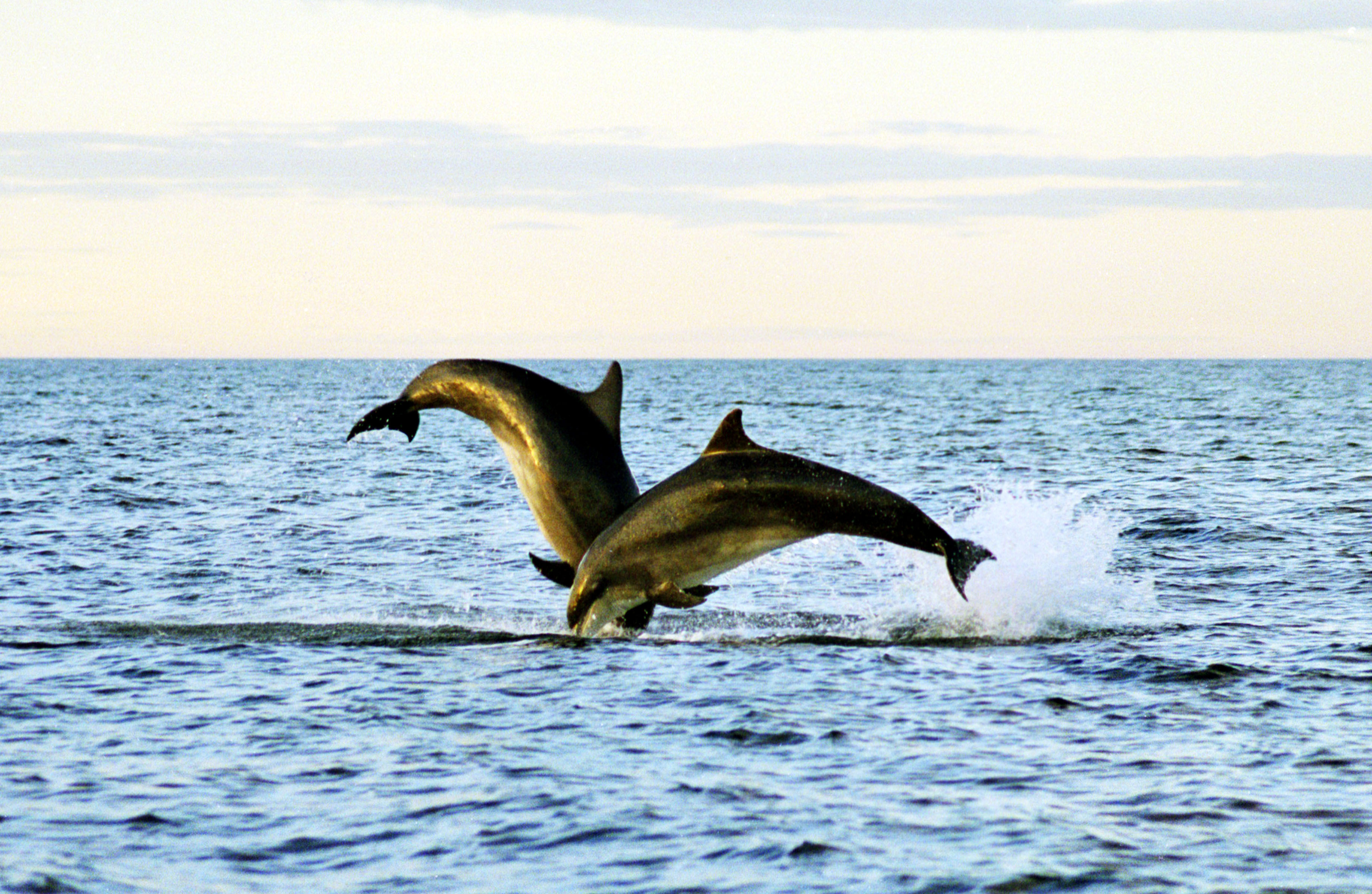 Dolphins-442_low_res.jpg#asset:1045
