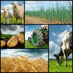 Se former pour travailler dans le secteur agroalimentaire
