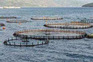 BTs Aquaculture