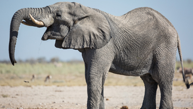 Elephant Stamps His Authority At Crowded Waterhole