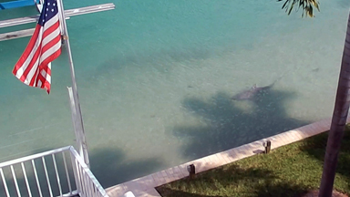 9ft Bull Shark Spotted in Florida Man's 'Backyard'