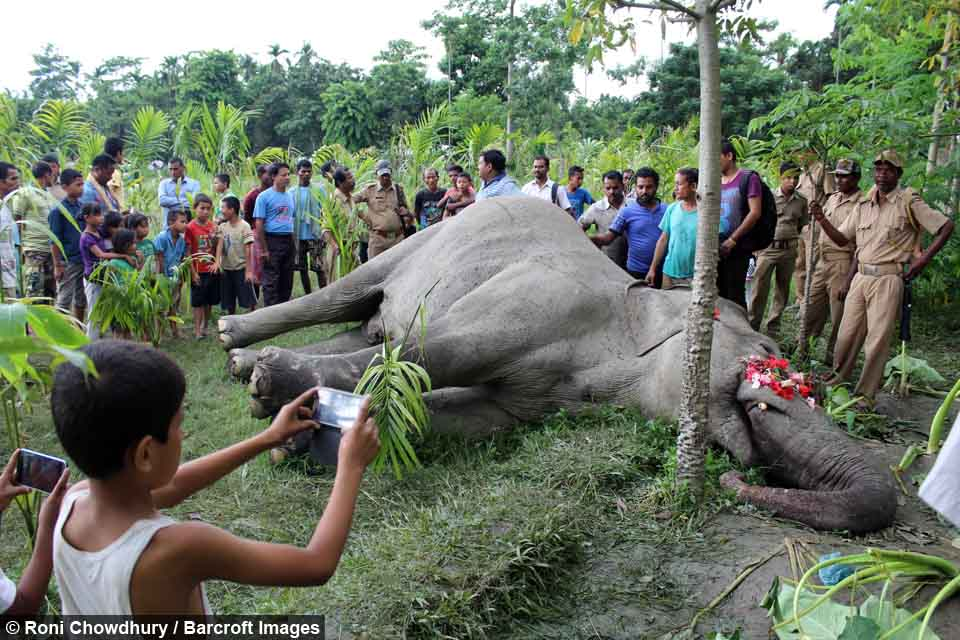Illegal Electric Fences Killed An Elephant In India