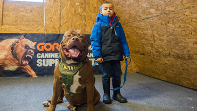 Hulk 'Attacks' 6-Year-Old Pit Bull Trainer