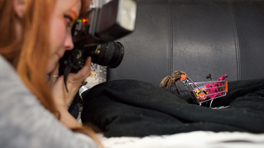 Insta-Wincy Spider: Pet Tarantula Stars In Quirky Pictures