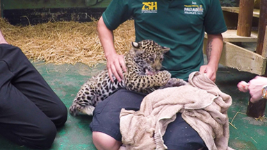 The Family Who Bought A Zoo: Cute Baby Jaguar Arrives