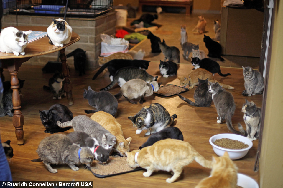 Ultimate Cat Lady Woman Shares Her Home With 1 100 Rescue