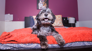 Inside New York's Luxury Hotel - For Dogs