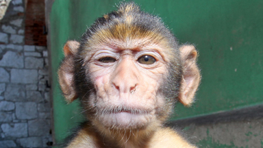 Monkey Business: Meet Gibraltar's Cheeky Macaques