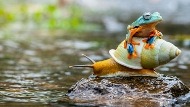 Snail Trail: Flying Frog Hitches A Ride