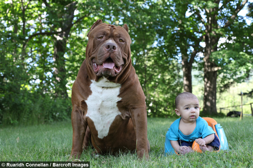Show Me Pictures Of The Hulk The Dog