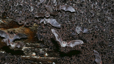 Thousands of bats found hibernating from the cold weather inside public walkway