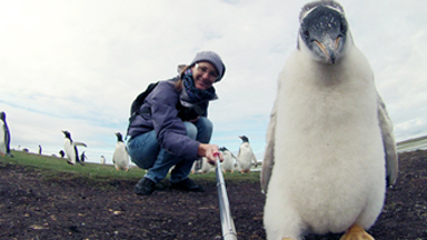 Say cheese: Baby Penguin Poses for Selfie