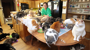 Ultimate Cat Lady: Woman Shares Her Home With 1,100 Rescue Felines
