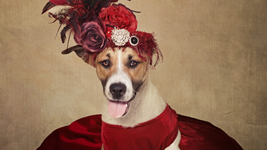 Canine Catwalk: Rescue Dogs Get Dressed Up For Adoption
