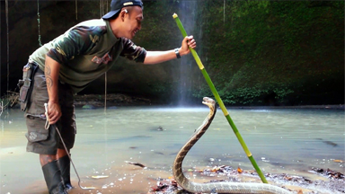 World's Most Dangerous Job? Snake Catchers Rescue Deadly Species