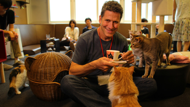 The 'Calico Cat Café' In Tokyo