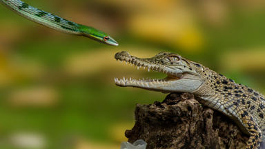 Twist and Pout: Snake Pulls Zoolander-Style Photobomb