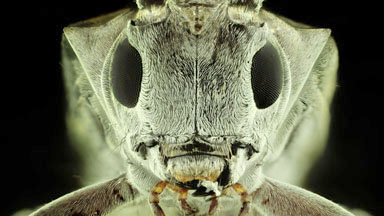 Super Macro Insects Up close and in stunning detail