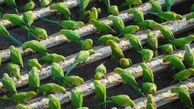 'Birdman' Of Chennai feeds up to 4,000 birds a day