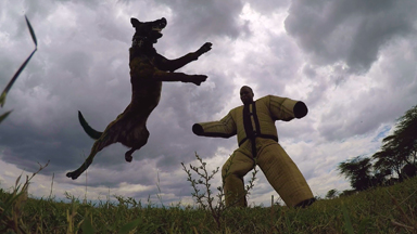 Anti-Poaching Dogs Protect Kenya's Endangered Wildlife