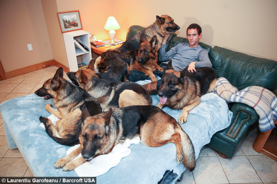 Cesar Millan Dogs Sleeping On Bed