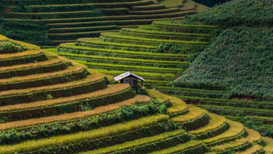 Rice and Shine: The artistic agriculture of Vietnam's rice hills
