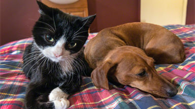 Quadriplegic Cat Strikes Up Unlikely Friendship With Dachshund