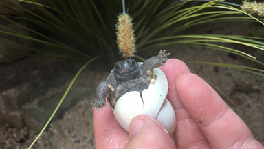 Hatching turtles: A shell-ebration for an endangered species