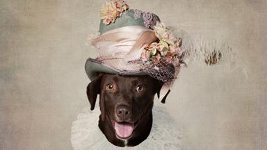 Dapper Dogs: Shelter Pets Get A Festive Makeover