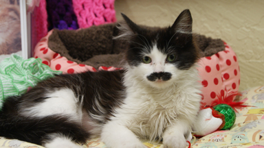 Feline Fine: New Home For Abandoned Moustache Cat
