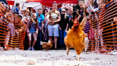 Chicken Run: Feathers Fly In World Hen Racing Championships