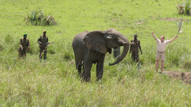 Elephant Saved After Maggot Infested Injury