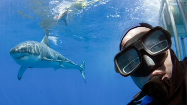 Diver Poses For 'Selfie' With Great White Shark