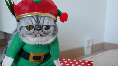 Santa's little helper: Herman The Scaredy Cat's first Christmas